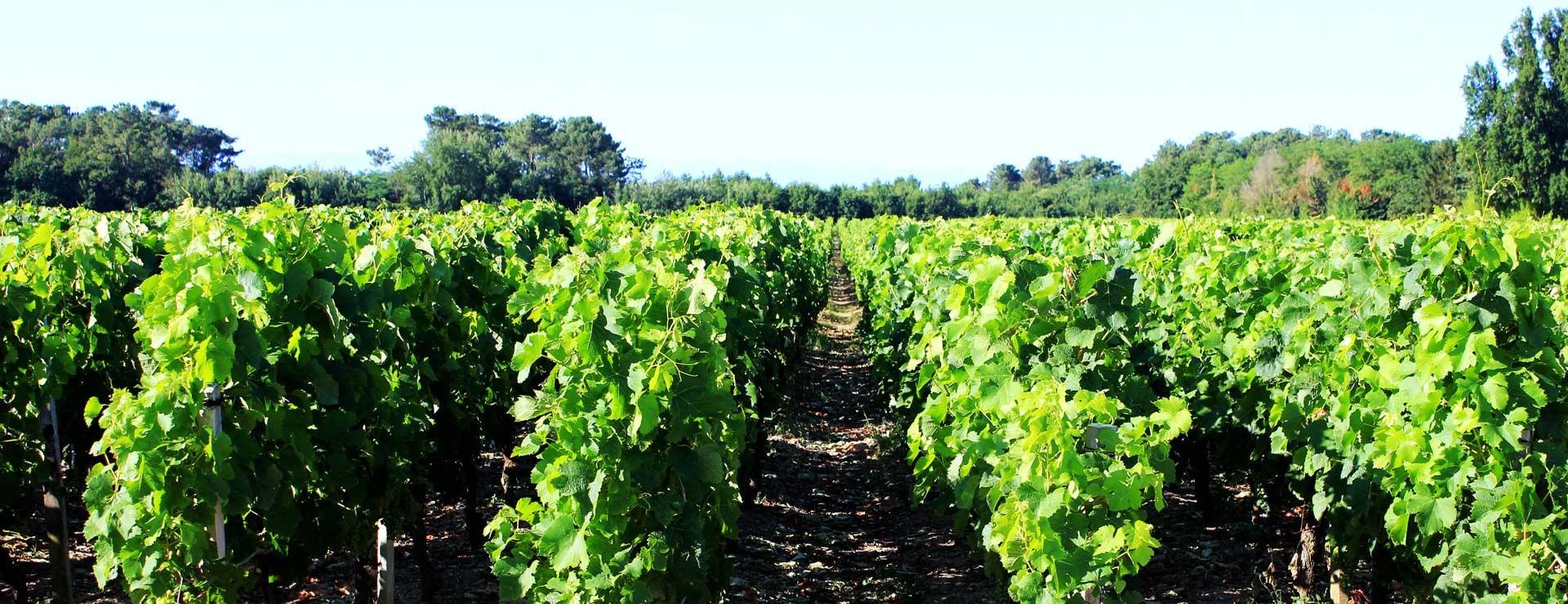 cropped-chateau-picourneau-wine.jpg